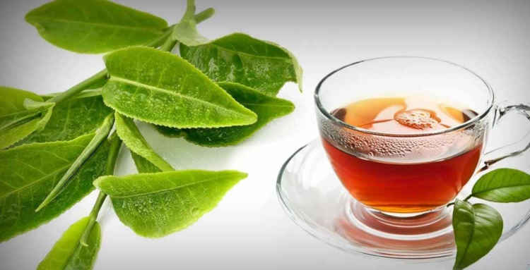Effect of guava: Guava leaves guava leaves and fertility, guava leaves benefits and side effects, guava leaves benefits for ski, guava leaves for infection, guava leaves benefits, guava leaves tea during pregnancy, guava leaves for diabetes, how to use guava leaves for pimples, Guava tea, guava tea side effects, guava leaf tea for sleep, where to buy guava leaf tea, guava leaves tea during pregnancy, how much guava tea can i drink, guava leaves and fertility, guava leaves benefits for skin, guava leaves for infection, Guava: guava how to eat guava seeds, how to ripen guava, how to remove guava seeds, how to store guava, guava fruit recipes, yellow guava, guava benefits, how to eat a guava story Dysentery & Diarrhoea
