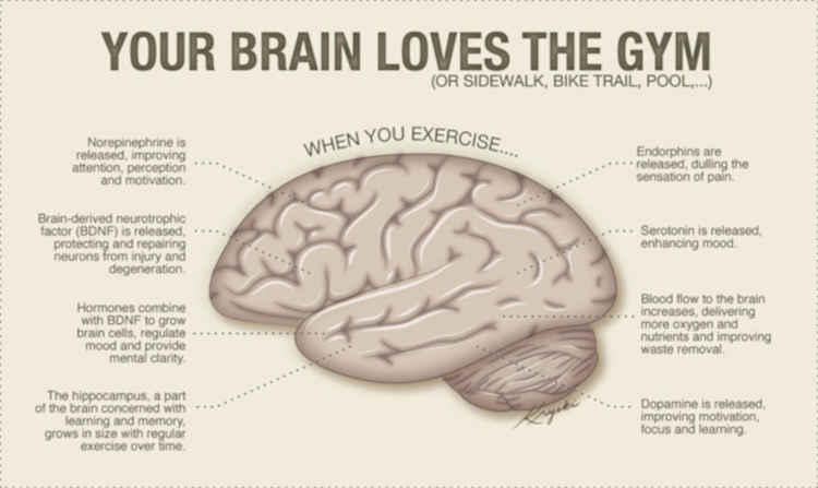 Exercise Improves Brain Function